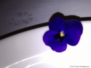2011-12-2 Violet on plate
